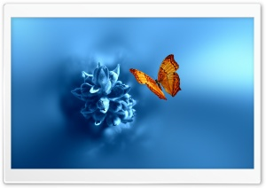 Butterfly Ultra HD Wallpaper for 4K UHD Widescreen desktop, tablet & smartphone