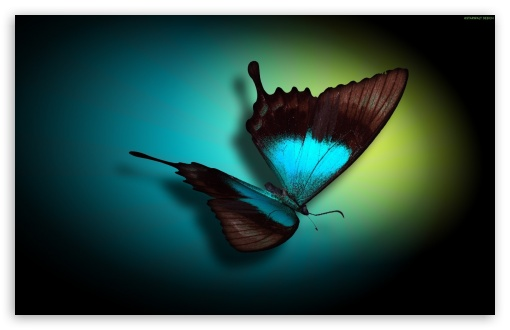 Butterfly ❤ 4K UHD Wallpaper for Wide 16:10 5:3 Widescreen WHXGA WQXGA WUXGA WXGA WGA ; 4K UHD 16:9 Ultra High Definition 2160p 1440p 1080p 900p 720p ; Mobile 5:3 16:9 - WGA 2160p 1440p 1080p 900p 720p ;