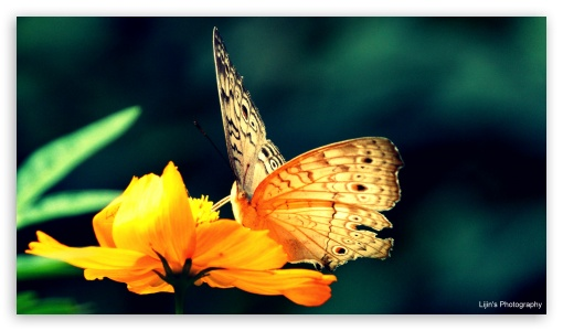 Butterfly HD wallpaper for HD 16:9 High Definition WQHD QWXGA 1080p 900p 720p QHD nHD ; UHD 16:9 WQHD QWXGA 1080p 900p 720p QHD nHD ; Mobile 16:9 - WQHD QWXGA 1080p 900p 720p QHD nHD ;