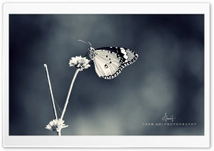 Butterfly-3 BW HD Wide Wallpaper for Widescreen