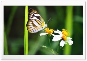 Butterfly Ultra HD Wallpaper for 4K UHD Widescreen desktop, tablet & smartphone