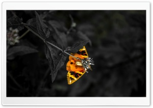 Butterfly HD Wide Wallpaper for 4K UHD Widescreen desktop & smartphone