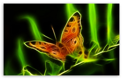 Butterfly HD wallpaper for Wide 16:10 5:3 Widescreen WHXGA WQXGA WUXGA WXGA WGA ; HD 16:9 High Definition WQHD QWXGA 1080p 900p 720p QHD nHD ; Standard 4:3 5:4 3:2 Fullscreen UXGA XGA SVGA QSXGA SXGA DVGA HVGA HQVGA devices ( Apple PowerBook G4 iPhone 4 3G 3GS iPod Touch ) ; Tablet 1:1 ; iPad 1/2/Mini ; Mobile 4:3 5:3 3:2 16:9 5:4 - UXGA XGA SVGA WGA DVGA HVGA HQVGA devices ( Apple PowerBook G4 iPhone 4 3G 3GS iPod Touch ) WQHD QWXGA 1080p 900p 720p QHD nHD QSXGA SXGA ;