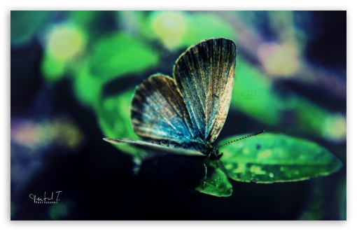 Butterfly ❤ 4K UHD Wallpaper for Wide 16:10 5:3 Widescreen WHXGA WQXGA WUXGA WXGA WGA ; 4K UHD 16:9 Ultra High Definition 2160p 1440p 1080p 900p 720p ; UHD 16:9 2160p 1440p 1080p 900p 720p ; Standard 4:3 5:4 3:2 Fullscreen UXGA XGA SVGA QSXGA SXGA DVGA HVGA HQVGA ( Apple PowerBook G4 iPhone 4 3G 3GS iPod Touch ) ; Tablet 1:1 ; iPad 1/2/Mini ; Mobile 4:3 5:3 3:2 16:9 5:4 - UXGA XGA SVGA WGA DVGA HVGA HQVGA ( Apple PowerBook G4 iPhone 4 3G 3GS iPod Touch ) 2160p 1440p 1080p 900p 720p QSXGA SXGA ;