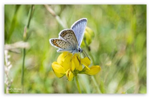 Download Butterfly HD Wallpaper