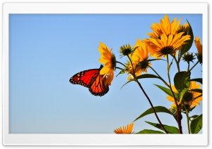 Butterfly - Illinois HD Wide Wallpaper for Widescreen