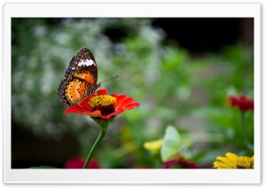 Butterfly   Thailand HD Wide Wallpaper for Widescreen