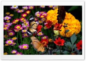 Butterfly and Colorful Flowers HD Wide Wallpaper for 4K UHD Widescreen desktop & smartphone