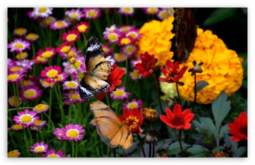 Butterfly and Colorful Flowers ❤ 4K UHD Wallpaper for Wide 16:10 5:3 Widescreen WHXGA WQXGA WUXGA WXGA WGA ; 4K UHD 16:9 Ultra High Definition 2160p 1440p 1080p 900p 720p ; UHD 16:9 2160p 1440p 1080p 900p 720p ; Standard 4:3 5:4 3:2 Fullscreen UXGA XGA SVGA QSXGA SXGA DVGA HVGA HQVGA ( Apple PowerBook G4 iPhone 4 3G 3GS iPod Touch ) ; Smartphone 5:3 WGA ; Tablet 1:1 ; iPad 1/2/Mini ; Mobile 4:3 5:3 3:2 16:9 5:4 - UXGA XGA SVGA WGA DVGA HVGA HQVGA ( Apple PowerBook G4 iPhone 4 3G 3GS iPod Touch ) 2160p 1440p 1080p 900p 720p QSXGA SXGA ;