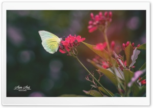 Butterfly and Flower HD Wide Wallpaper for Widescreen