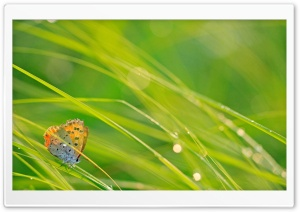 Butterfly And Green Grass HD Wide Wallpaper for Widescreen
