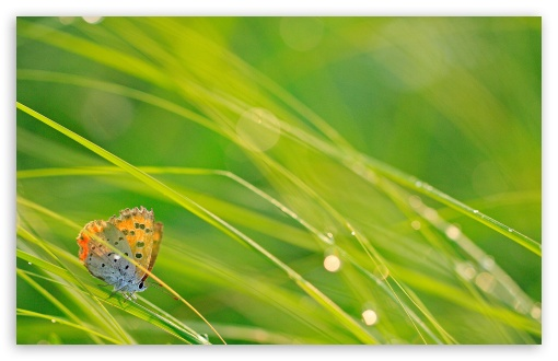 Butterfly And Green Grass ❤ 4K UHD Wallpaper for Wide 16:10 5:3 Widescreen WHXGA WQXGA WUXGA WXGA WGA ; 4K UHD 16:9 Ultra High Definition 2160p 1440p 1080p 900p 720p ; Standard 4:3 5:4 3:2 Fullscreen UXGA XGA SVGA QSXGA SXGA DVGA HVGA HQVGA ( Apple PowerBook G4 iPhone 4 3G 3GS iPod Touch ) ; Tablet 1:1 ; iPad 1/2/Mini ; Mobile 4:3 5:3 3:2 16:9 5:4 - UXGA XGA SVGA WGA DVGA HVGA HQVGA ( Apple PowerBook G4 iPhone 4 3G 3GS iPod Touch ) 2160p 1440p 1080p 900p 720p QSXGA SXGA ;
