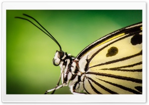Butterfly Antennae HD Wide Wallpaper for Widescreen