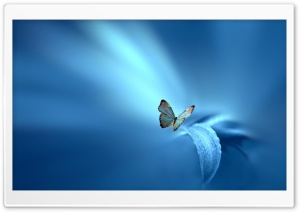 Butterfly, Blue Background HD Wide Wallpaper for 4K UHD Widescreen desktop & smartphone
