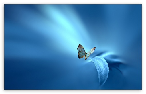 Butterfly, Blue Background ❤ 4K UHD Wallpaper for Wide 16:10 5:3 Widescreen WHXGA WQXGA WUXGA WXGA WGA ; 4K UHD 16:9 Ultra High Definition 2160p 1440p 1080p 900p 720p ; Standard 4:3 5:4 3:2 Fullscreen UXGA XGA SVGA QSXGA SXGA DVGA HVGA HQVGA ( Apple PowerBook G4 iPhone 4 3G 3GS iPod Touch ) ; Smartphone 16:9 3:2 5:3 2160p 1440p 1080p 900p 720p DVGA HVGA HQVGA ( Apple PowerBook G4 iPhone 4 3G 3GS iPod Touch ) WGA ; Tablet 1:1 ; iPad 1/2/Mini ; Mobile 4:3 5:3 3:2 16:9 5:4 - UXGA XGA SVGA WGA DVGA HVGA HQVGA ( Apple PowerBook G4 iPhone 4 3G 3GS iPod Touch ) 2160p 1440p 1080p 900p 720p QSXGA SXGA ;