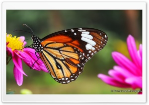 Butterfly Close Shot HD Wide Wallpaper for Widescreen