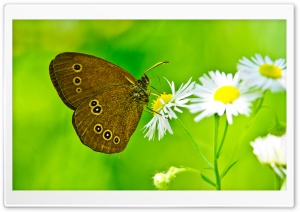 Butterfly Close-Up HD Wide Wallpaper for Widescreen