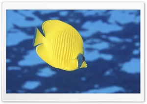 Butterfly Fish HD Wide Wallpaper for Widescreen