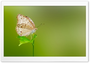 Butterfly Green Background HD Wide Wallpaper for Widescreen