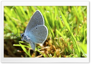 Butterfly in Diamonds HD Wide Wallpaper for Widescreen