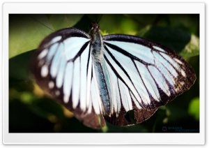 Butterfly in Peace HD Wide Wallpaper for Widescreen