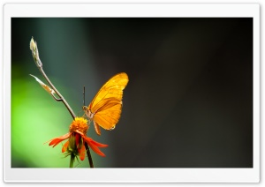 Butterfly In The Light HD Wide Wallpaper for 4K UHD Widescreen desktop & smartphone