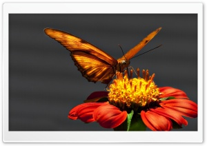 Butterfly Macro HD Wide Wallpaper for Widescreen