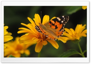 Butterfly Macro, Summer HD Wide Wallpaper for Widescreen