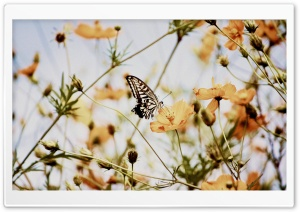 Butterfly on a Cosmos Flower HD Wide Wallpaper for Widescreen