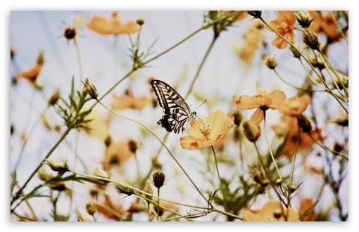Butterfly on a Cosmos Flower ❤ 4K UHD Wallpaper for Wide 16:10 5:3 Widescreen WHXGA WQXGA WUXGA WXGA WGA ; 4K UHD 16:9 Ultra High Definition 2160p 1440p 1080p 900p 720p ; UHD 16:9 2160p 1440p 1080p 900p 720p ; Standard 4:3 5:4 3:2 Fullscreen UXGA XGA SVGA QSXGA SXGA DVGA HVGA HQVGA ( Apple PowerBook G4 iPhone 4 3G 3GS iPod Touch ) ; Smartphone 5:3 WGA ; Tablet 1:1 ; iPad 1/2/Mini ; Mobile 4:3 5:3 3:2 16:9 5:4 - UXGA XGA SVGA WGA DVGA HVGA HQVGA ( Apple PowerBook G4 iPhone 4 3G 3GS iPod Touch ) 2160p 1440p 1080p 900p 720p QSXGA SXGA ; Dual 16:10 5:3 16:9 4:3 5:4 WHXGA WQXGA WUXGA WXGA WGA 2160p 1440p 1080p 900p 720p UXGA XGA SVGA QSXGA SXGA ;