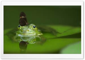 Butterfly on a Frog HD Wide Wallpaper for 4K UHD Widescreen desktop & smartphone