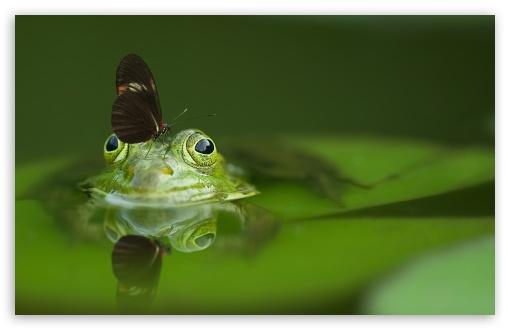 Butterfly On A Frog Ultra Hd Desktop Background Wallpaper For 4k Uhd Tv Widescreen Ultrawide Desktop Laptop Tablet Smartphone