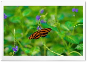 Butterfly on a Purple Flower HD Wide Wallpaper for Widescreen