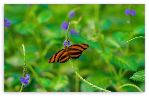 Butterfly on a Purple Flower ❤ 4K UHD Wallpaper for Wide 16:10 5:3 Widescreen WHXGA WQXGA WUXGA WXGA WGA ; 4K UHD 16:9 Ultra High Definition 2160p 1440p 1080p 900p 720p ; Standard 4:3 5:4 3:2 Fullscreen UXGA XGA SVGA QSXGA SXGA DVGA HVGA HQVGA ( Apple PowerBook G4 iPhone 4 3G 3GS iPod Touch ) ; Smartphone 3:2 5:3 DVGA HVGA HQVGA ( Apple PowerBook G4 iPhone 4 3G 3GS iPod Touch ) WGA ; Tablet 1:1 ; iPad 1/2/Mini ; Mobile 4:3 5:3 3:2 16:9 5:4 - UXGA XGA SVGA WGA DVGA HVGA HQVGA ( Apple PowerBook G4 iPhone 4 3G 3GS iPod Touch ) 2160p 1440p 1080p 900p 720p QSXGA SXGA ; Dual 5:3 16:9 4:3 5:4 WGA 2160p 1440p 1080p 900p 720p UXGA XGA SVGA QSXGA SXGA ;