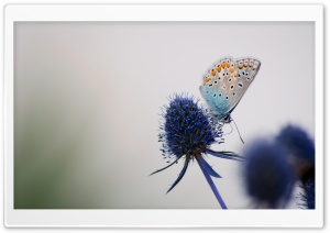 Butterfly on a Purple Flower Macro HD Wide Wallpaper for Widescreen