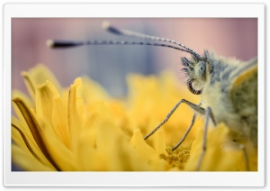 Butterfly on a Yellow Flower Macro HD Wide Wallpaper for Widescreen