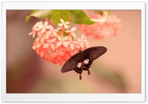 Butterfly on Flower HD Wide Wallpaper for Widescreen