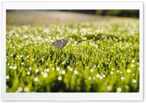 Butterfly On Grass HD Wide Wallpaper for Widescreen