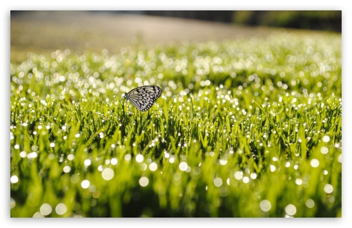Butterfly On Grass HD wallpaper for Wide 16:10 5:3 Widescreen WHXGA WQXGA WUXGA WXGA WGA ; HD 16:9 High Definition WQHD QWXGA 1080p 900p 720p QHD nHD ; Standard 4:3 5:4 3:2 Fullscreen UXGA XGA SVGA QSXGA SXGA DVGA HVGA HQVGA devices ( Apple PowerBook G4 iPhone 4 3G 3GS iPod Touch ) ; Tablet 1:1 ; iPad 1/2/Mini ; Mobile 4:3 5:3 3:2 16:9 5:4 - UXGA XGA SVGA WGA DVGA HVGA HQVGA devices ( Apple PowerBook G4 iPhone 4 3G 3GS iPod Touch ) WQHD QWXGA 1080p 900p 720p QHD nHD QSXGA SXGA ; Dual 16:10 5:3 16:9 4:3 5:4 WHXGA WQXGA WUXGA WXGA WGA WQHD QWXGA 1080p 900p 720p QHD nHD UXGA XGA SVGA QSXGA SXGA ;