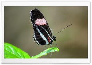 Butterfly On Leaf HD Wide Wallpaper for Widescreen