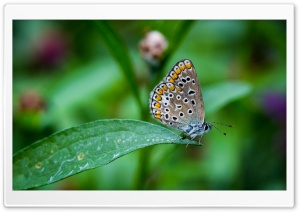 Butterfly on the Leaf HD Wide Wallpaper for 4K UHD Widescreen desktop & smartphone