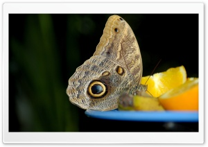 Butterfly, Orange Fruit HD Wide Wallpaper for 4K UHD Widescreen desktop & smartphone