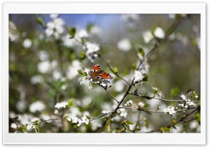 Butterfly Springtime HD Wide Wallpaper for Widescreen