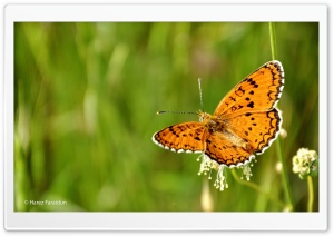 Butterfly with Kurdistan Nature HD Wide Wallpaper for Widescreen