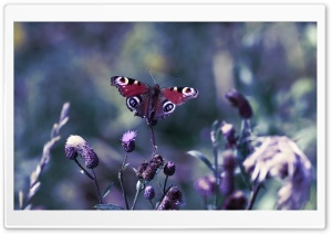 Butterfly With Open Wings HD Wide Wallpaper for Widescreen