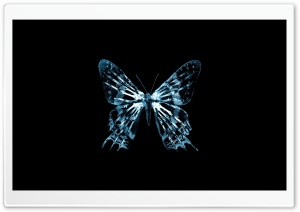 Butterfly X Ray HD Wide Wallpaper for 4K UHD Widescreen desktop & smartphone