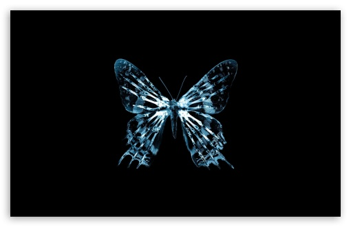 Butterfly X Ray HD wallpaper for Wide 16:10 5:3 Widescreen WHXGA WQXGA WUXGA WXGA WGA ; HD 16:9 High Definition WQHD QWXGA 1080p 900p 720p QHD nHD ; Standard 4:3 5:4 3:2 Fullscreen UXGA XGA SVGA QSXGA SXGA DVGA HVGA HQVGA devices ( Apple PowerBook G4 iPhone 4 3G 3GS iPod Touch ) ; Tablet 1:1 ; iPad 1/2/Mini ; Mobile 4:3 5:3 3:2 16:9 5:4 - UXGA XGA SVGA WGA DVGA HVGA HQVGA devices ( Apple PowerBook G4 iPhone 4 3G 3GS iPod Touch ) WQHD QWXGA 1080p 900p 720p QHD nHD QSXGA SXGA ; Dual 4:3 5:4 UXGA XGA SVGA QSXGA SXGA ;