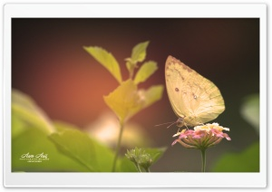 Butterfly-Yellow HD Wide Wallpaper for Widescreen