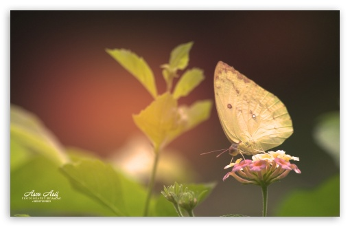 Butterfly-Yellow ❤ 4K UHD Wallpaper for Wide 16:10 5:3 Widescreen WHXGA WQXGA WUXGA WXGA WGA ; 4K UHD 16:9 Ultra High Definition 2160p 1440p 1080p 900p 720p ; UHD 16:9 2160p 1440p 1080p 900p 720p ; Standard 3:2 Fullscreen DVGA HVGA HQVGA ( Apple PowerBook G4 iPhone 4 3G 3GS iPod Touch ) ; Smartphone 5:3 WGA ; Tablet 1:1 ; iPad 1/2/Mini ; Mobile 4:3 5:3 3:2 16:9 - UXGA XGA SVGA WGA DVGA HVGA HQVGA ( Apple PowerBook G4 iPhone 4 3G 3GS iPod Touch ) 2160p 1440p 1080p 900p 720p ;