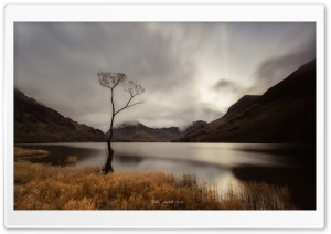 Buttermere Lake, Lone Tree, Autumn, England Landscape Ultra HD Wallpaper for 4K UHD Widescreen desktop, tablet & smartphone